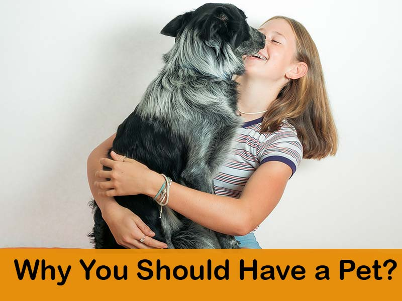 Benefits of having a pet in your life