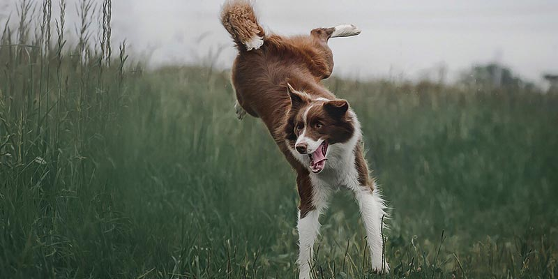 why dogs are better than cats 10