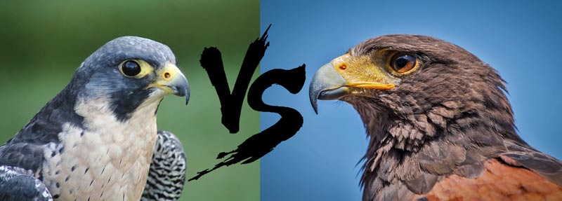 hawks vs falcons