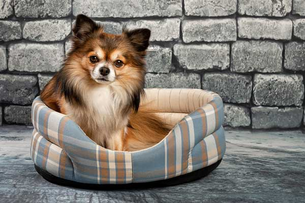 Frequently asked questions on dog beds