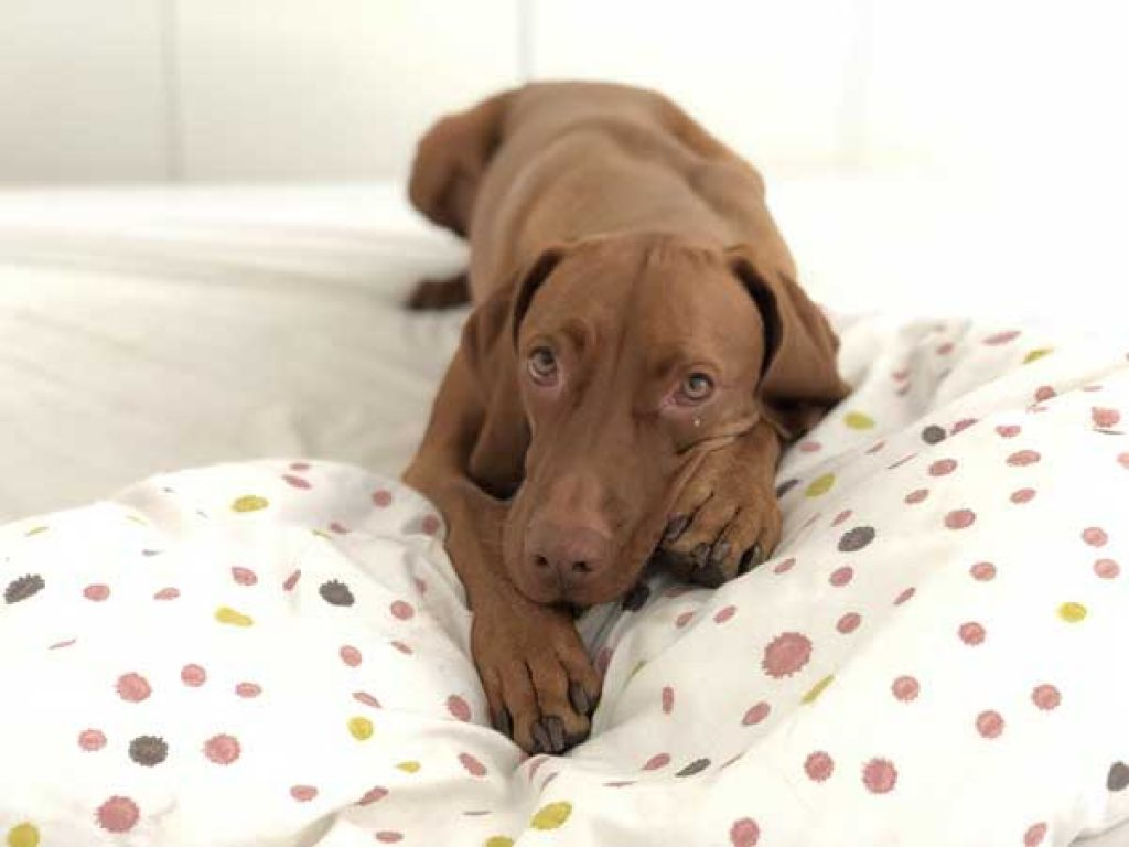 Important features to consider before buying a dog bed