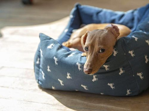 Best Dog Beds to Buy