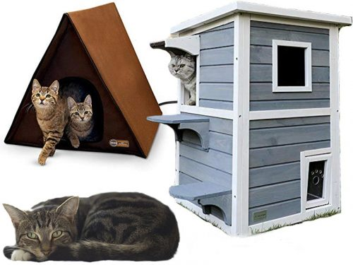 7 Best Outdoor Cat Houses for Multiple Cats