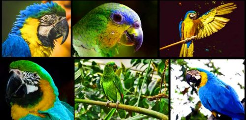 Do Parrots Have Sense of Smell?