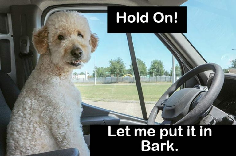 Best Seat Covers For Dog Hair