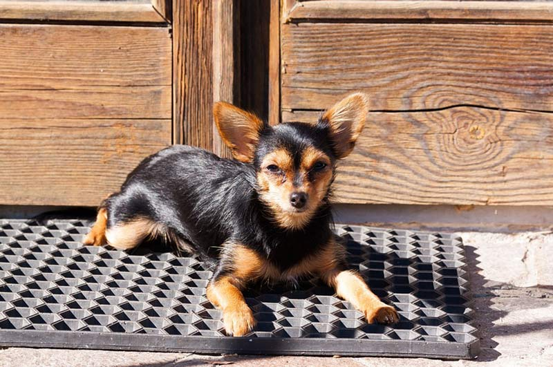 Best Outdoor Doormats For Dogs