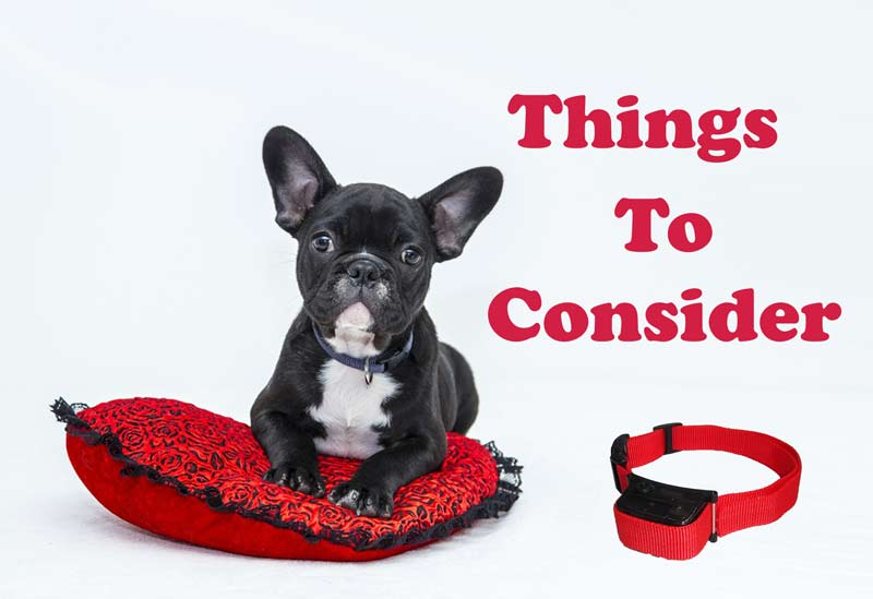 Things to consider before buying your Citronella Bark Collar