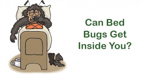 Can bed bugs get into your private parts?