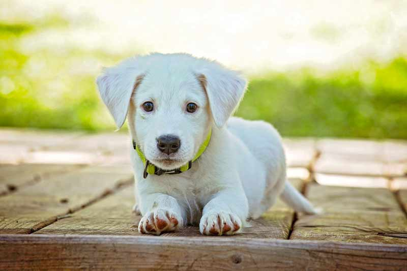 Understanding Your Puppy's growth phase