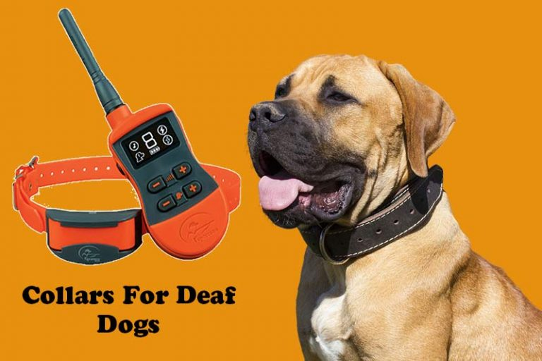 Top 8 Best Training Collars For Deaf Dogs