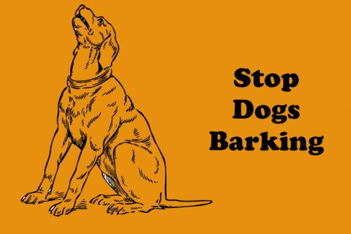 Best Devices To Stop Dog Barking