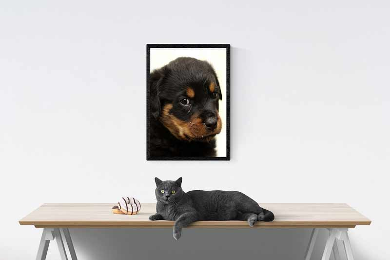 Introducing a Rottweiler to a cat home