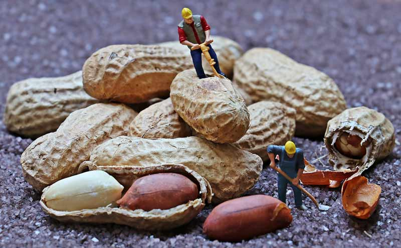 Can You Eat Peanut Shells?