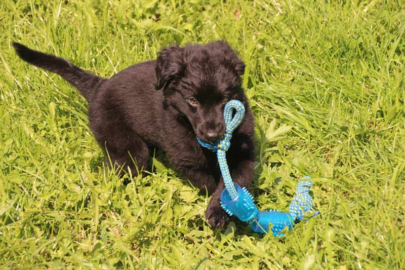 Other Reasons Why Dogs Shake Their Toys