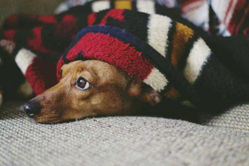How to Calm a Dog Down at Night?