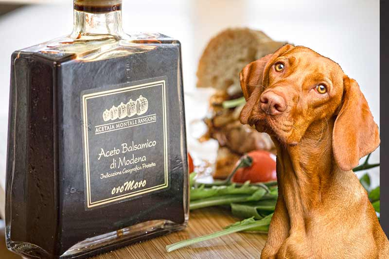 Can Dogs Eat Balsamic Vinegar?