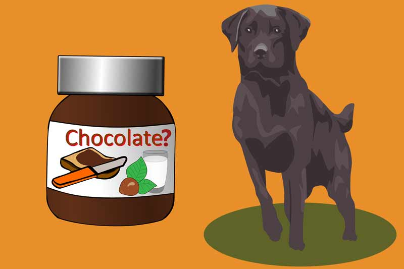 Is Nutella Bad For Dogs?