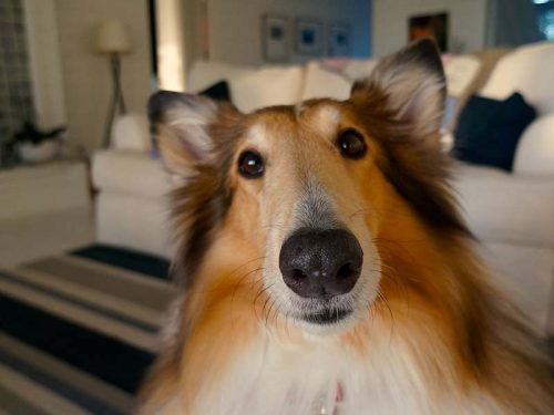 Why Dogs Bark At Vacuum Cleaners?