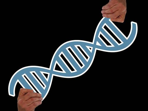 Half Sibling DNA Test - All You Need To Know