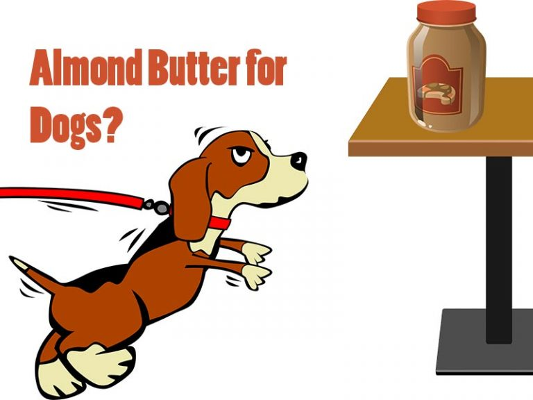 Can My Dog Eat Almond Butter?