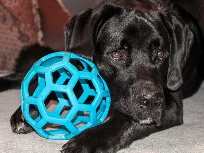 Overcome dogs obsessions with balls