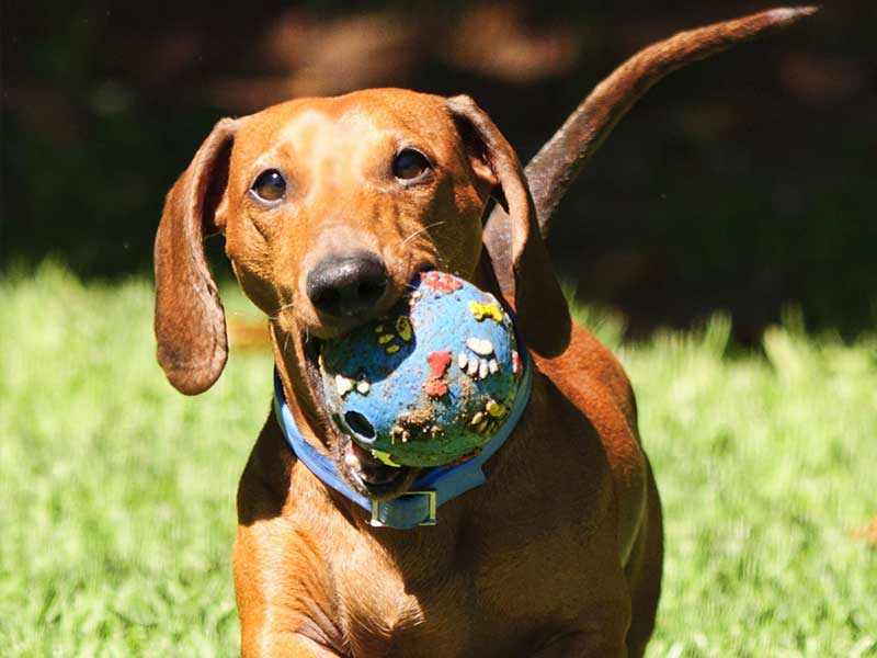 Can balls be harmful for dogs?