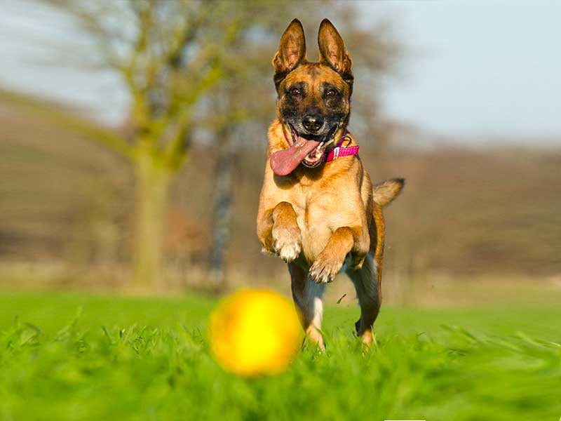 Dogs enjoy catching the ball