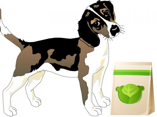 Can my Dog Eat Cabbage?