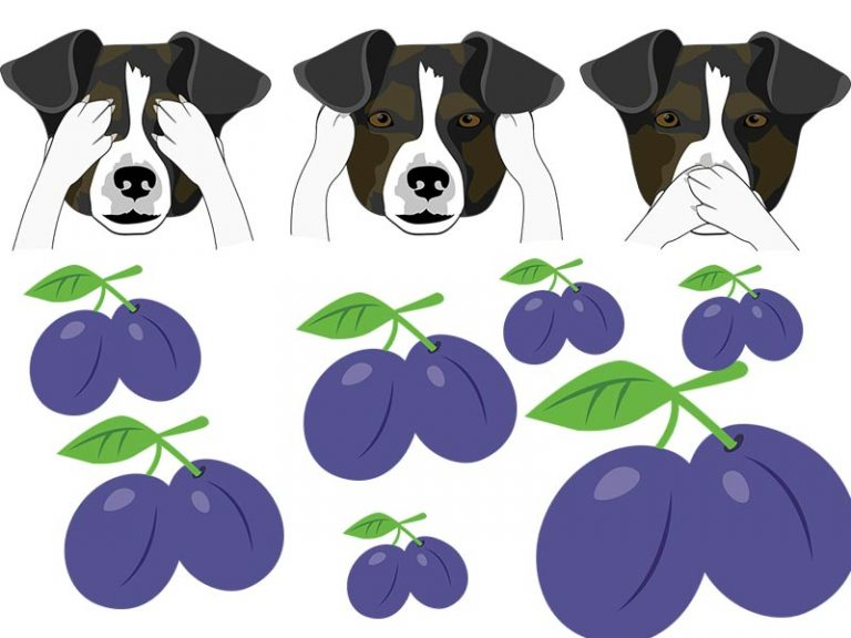 Can your dog eat prunes?