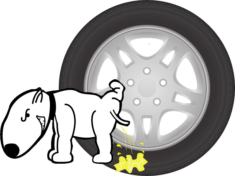 Dogs Pee On Tires