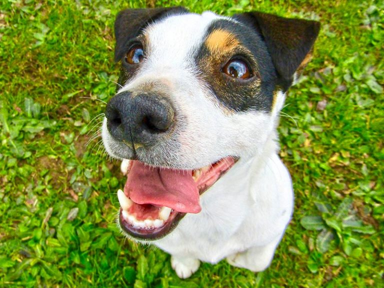 Reasons Your Dog's Bottom Jaw Chatter